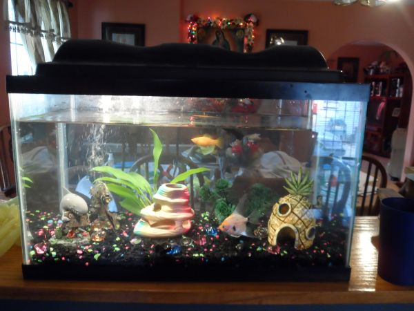 AWESOME 10 GALLON FISH TANK WITH ACCESORIES GREAT PRICE - $75 (ALAMO TX)