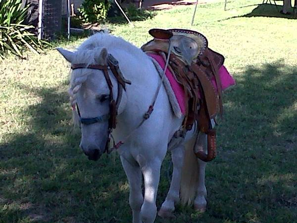 Safe Pony Rentals For All Occasions (Edinburg)