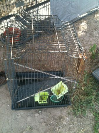 Bird Cage and smalll Dog Cage For Sale  (Edinburg )