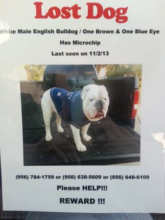 Still looking for my English Bulldog    san juan tx