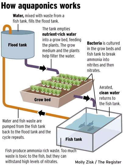Aquaponics Home Food Source