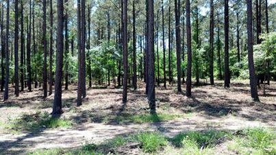 Land Clearing Services  Texas