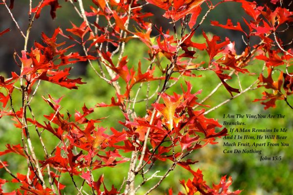 Christian Inspirational Photos Art    Austin Tx