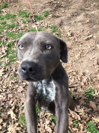 Registered Blue Pits -   x0024 250  Will Travel