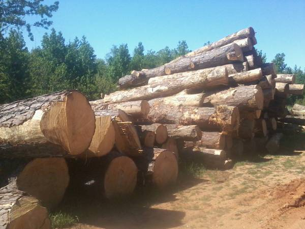 Buying Logs _______ hardwood, pine, cedar  R  R Mercantile Sawmill  (Wells Tx (18 miles N of Lufkin )