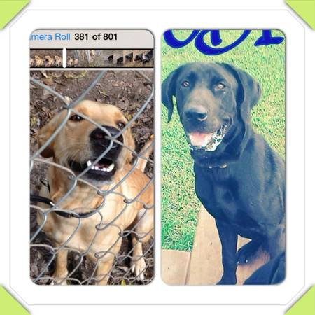 Two lost Dogs  Wild Peach  TX