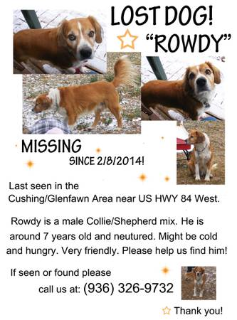 Lost Dog  Rowdy     Cushing