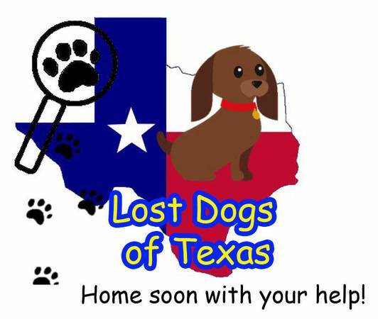 HAVE YOU LOST OR FOUND A DOG   WE CAN HELP   Free   East Texas