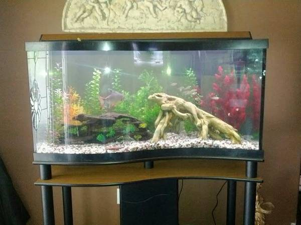 100 gallon wave front fish tank with custom stand - $600 (Hammond)