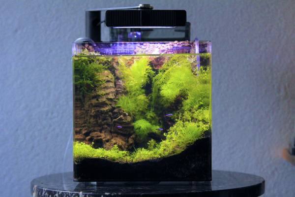 Beautiful Freshwater Planted Nano Aquarium - $200 (New Orleans - Uptown)