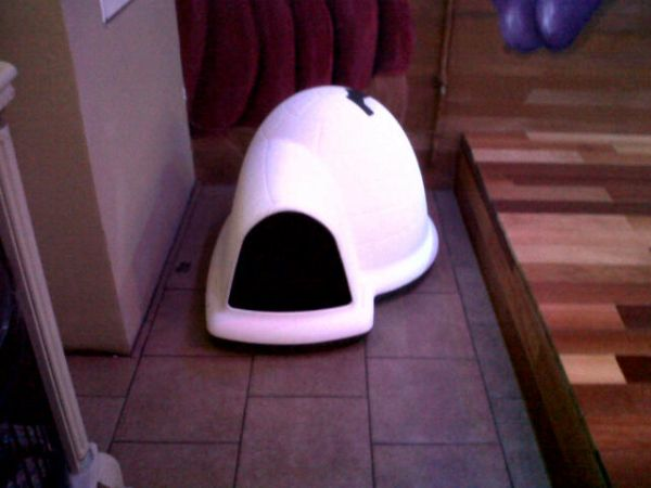 Dog House Medium Igloo - $40 (Marrero)