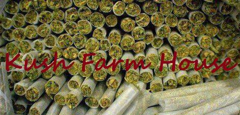 Smoke Best Med Marijuana Strains Here Now   Text 240 324-8173