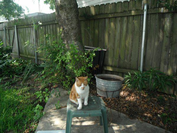 Lost orange white CAT - Reward  Spartan St  Kenner