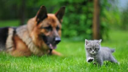 Lost your Pet Use the lost pet recovery service that professionals use