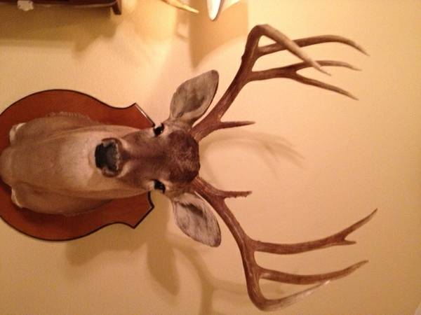 Hunting Lease (Webb, Duval Counties)