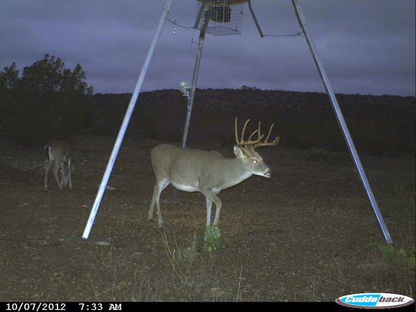 Managed Family Trophy Deer Hunting Lease - $2500 (North of Del Rio)