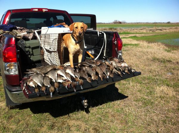 Guided Duck Hunts and Guided Goose Hunts SW Houston Area - $130 (Houston, Tx)