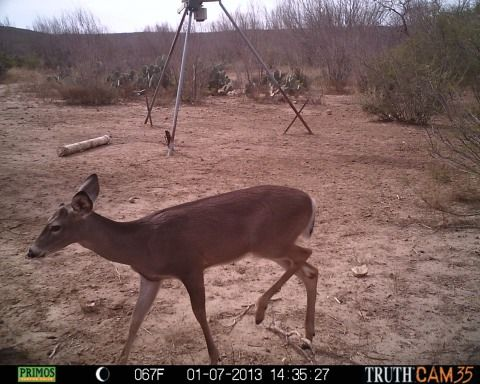 Doe and Antler-less Deer hunting - $225 (55. Mi San Antonio, near Yancey, Tx)
