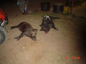 TODAY THRU FRIDAY...1 RANCH OPEN...LAST CHANCE...DOEHOG HUNTS - $125 (BrownwoodComanche area)