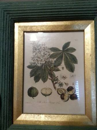 The Horse Chestnut Tree  - ART  - $75 (Kyle Seale and 1604)
