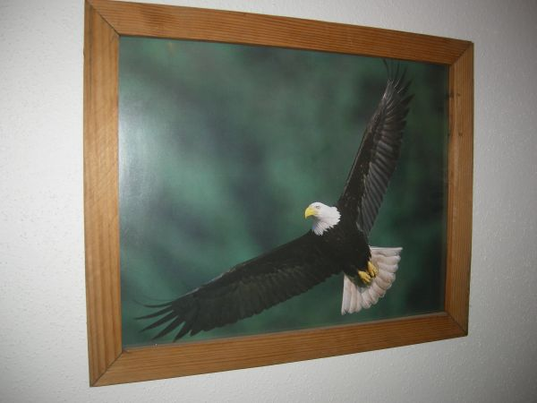 Eagle Photo Print 4 - $12 (SA Northwest)