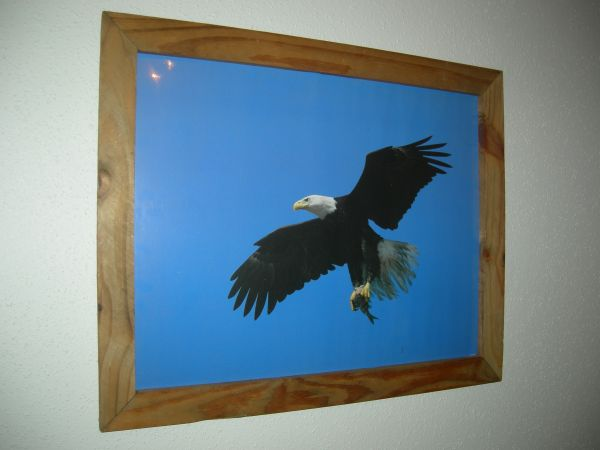 Eagle Photo Print 5 - $12 (SA Northwest)