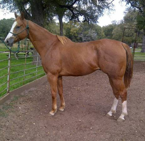 AQHA Race Bred Horses, Barrel, Rope, Breeding Prospects (N. Austin)
