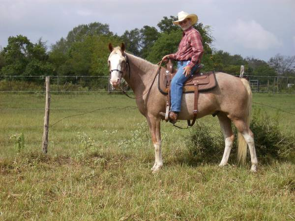 5 gaited trail, 2 show horses - $800 (Normangee)