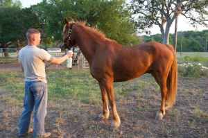 Team Roping Head Horse - $5500 (Lackland AFB Stables)