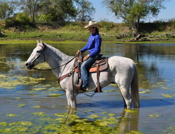 VIDEOBig Gentle Grey Pleasure Gelding - $1750 (Floresville)