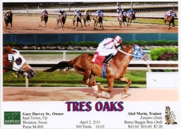 AAA Stallion Prospect by Tres Seis - $12000 (Somerset)