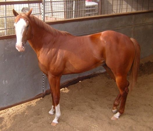 2 yr old Corona Cartel Grandson - $5500 (Somerset)