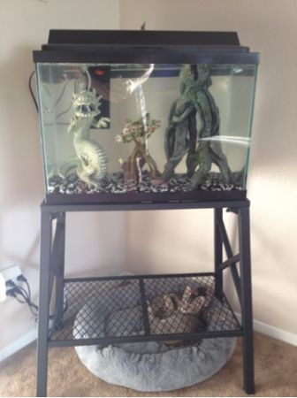 20 gallon fish tank with stand - $150 (Grissom Rd)