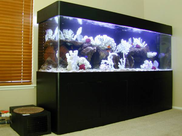 300 gallon acrylic fish tank for sale for 800 gallon fish tank