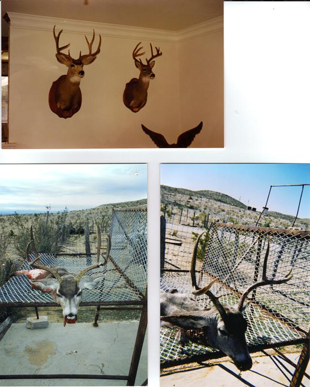 1 500  SOUTH TEXAS MULE DEER HUNT