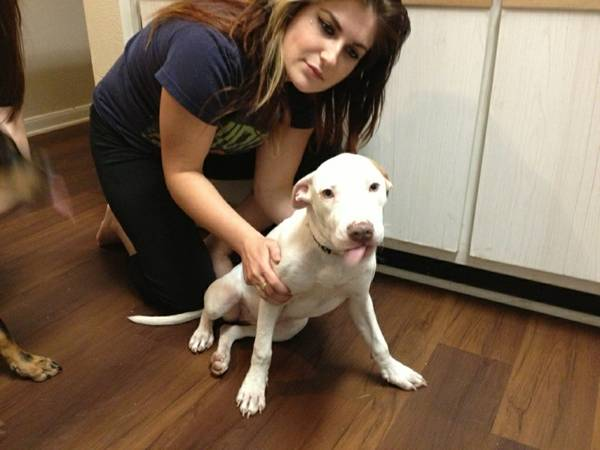 Lost white Red Nose Pitbull  Reward   San Marcos