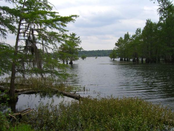 $50000 20 acres on east side of Nantachie Lake near Montgomery, LA (Nantachie Lake)