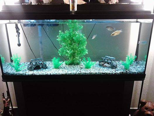 55 gallon fish tank and stand - x0024150 (shreveport)
