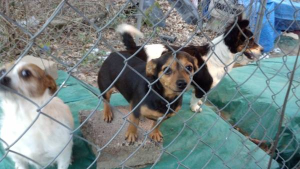 3 sweet  female dogs need a home   north Shreveport