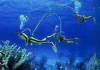 Divers needed now no exp. required (Marathon, FL)