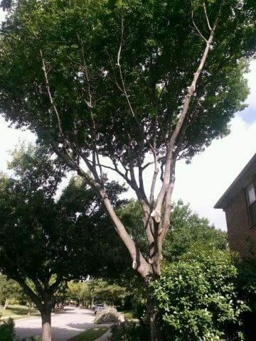 Rivas Tree Service and landscaping...Se habla espaol