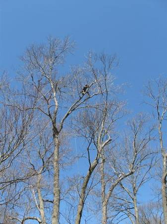 tree trimming or removal for trade or     texarkana