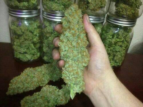 mmj dr cool for pain reliefs all in stocks