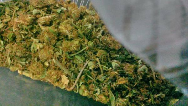 Top-Shelf MedicalRecreational Marijuanna