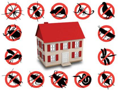 Call for a Pest Control Vancouver Expert