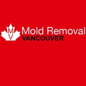 Wave Goodbye To Mold Scuffle  Choose Our Mold Removal Services