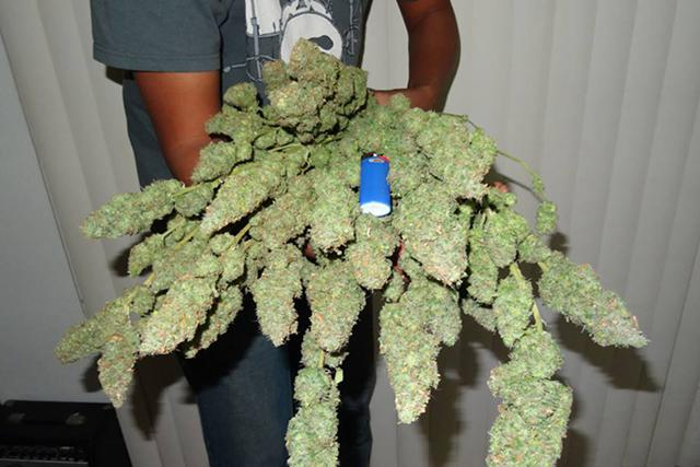 15  top quality marijuana strain for your medication and personal use call or text at 213 357-1510