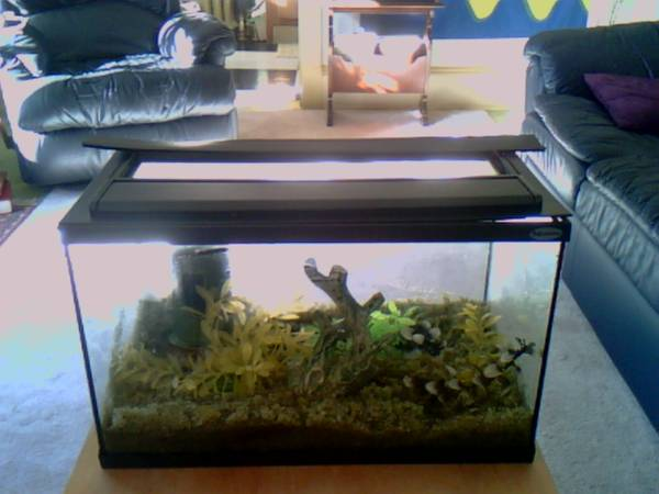 Aquarium Fish Tank 10 Gallon - $50 (Victoria)