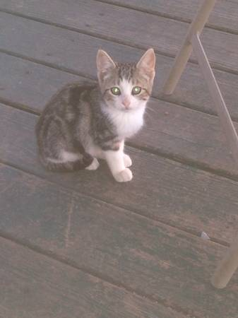 8 kittens free to good home (Waco, moody, temple)