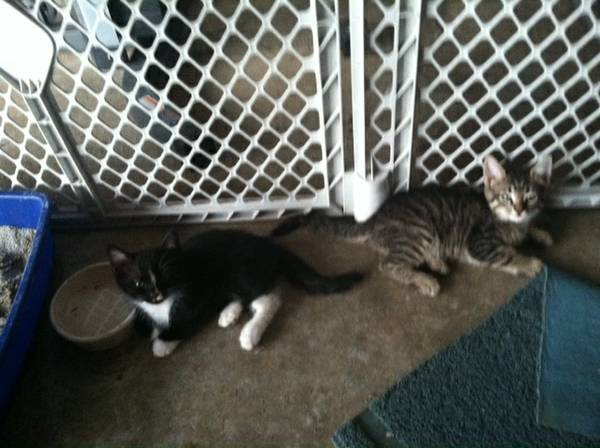 Very cute kittens FREE (Robinson)